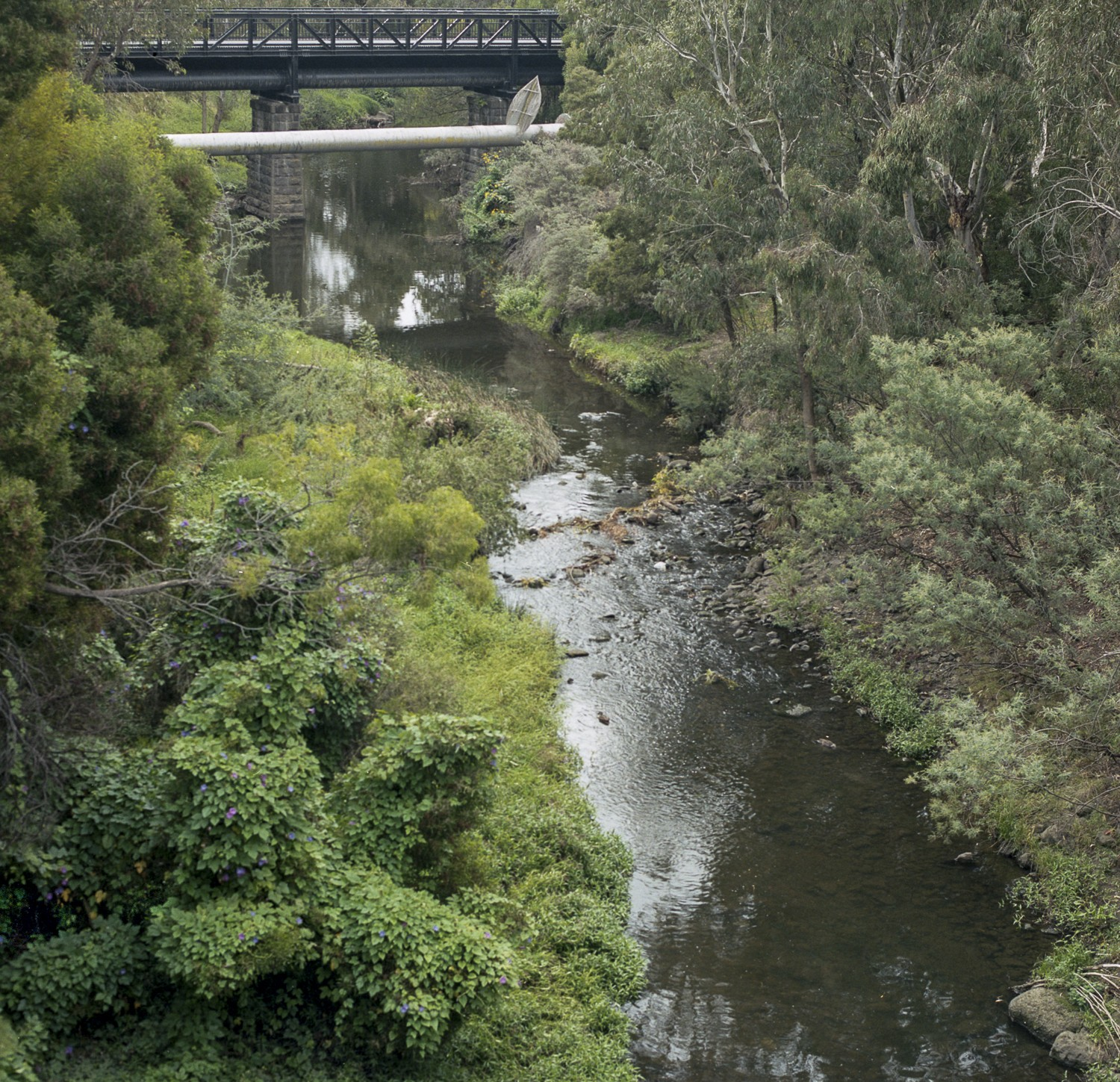 Merri Creek, Northcote, Melbourne