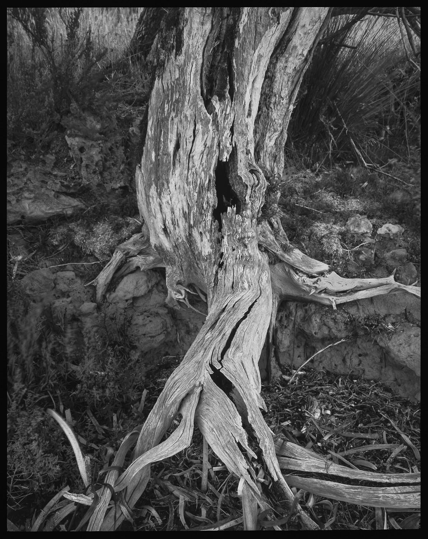 tree E6 corrected