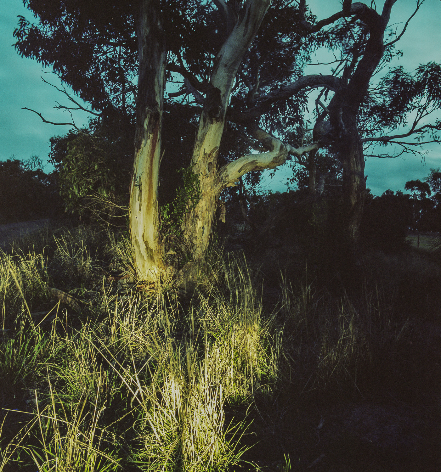twilight, Waitpinga