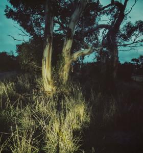 Dark landscapes