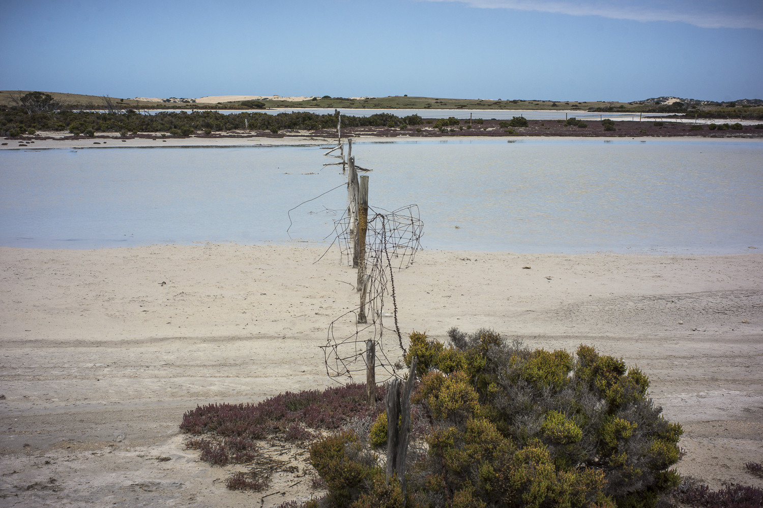 lagoons + fence, Coorong