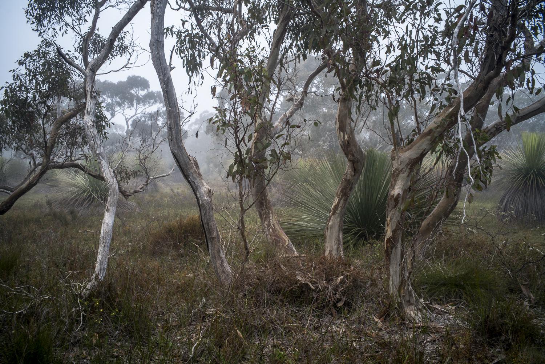 bushland + fog, Waitpinga