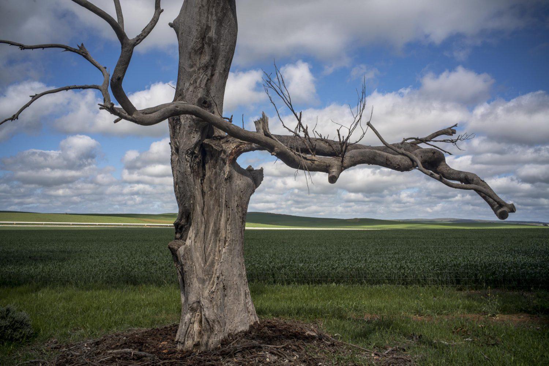 SATothillRangetree