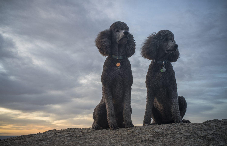 Maleko + Kayla, Rosetta Head