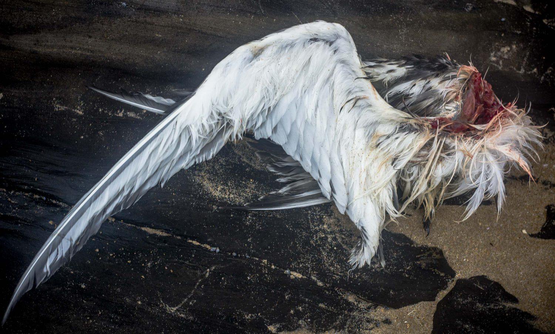 stilllife,  wing